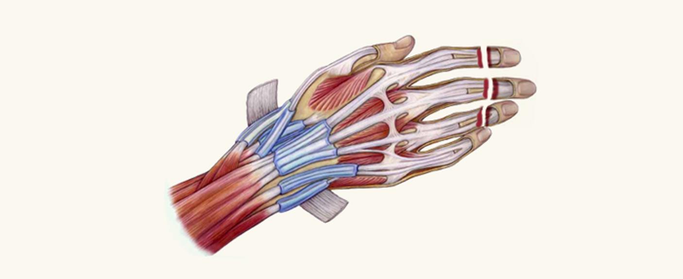 microvascular hand diagram